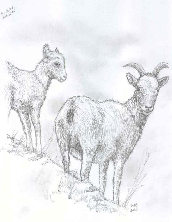 Dibujo Lapiz Animales Animales Hechos a Lapiz